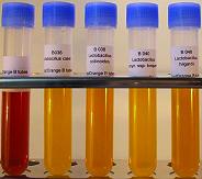 2036-10 FastOrange B tubes